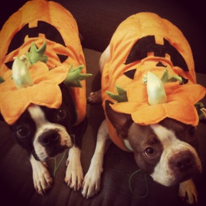 Cutest Pumpkins Ever!